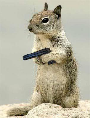 squirrel-with-handgun